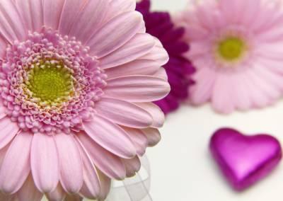 flower-3086546_960_720